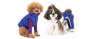 The Top Clothing Brands From Korea For Your Stylish Pet